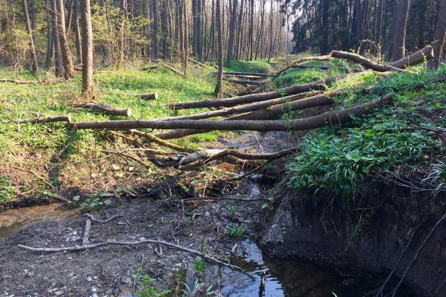 Zádolský potok na Svitavsku dostává původní podobu, kterou měl před narovnáním v 70. letech