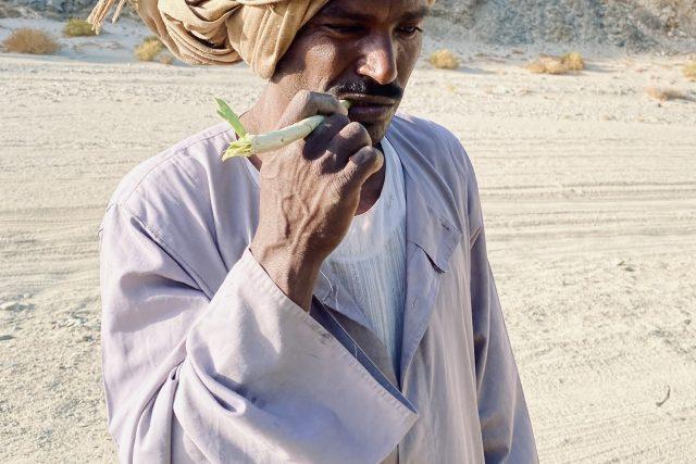 Ve Wádí Džimá rostou keře arák,  z jehož větviček si Beduíni dělají zubní kartáčky | foto: Štěpán Macháček,  Český rozhlas,  Český rozhlas