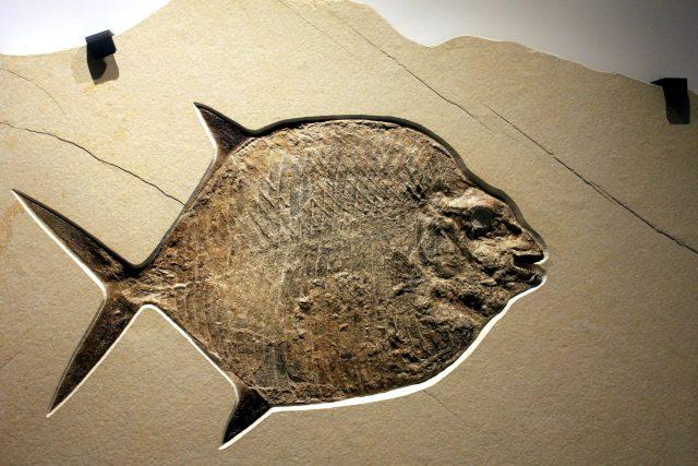 Fosilie ryby