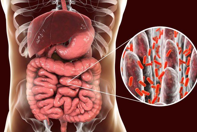 Střevní mikrobiota (ilustrační foto)