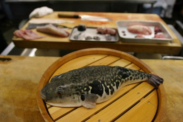 Příprava ryby fugu