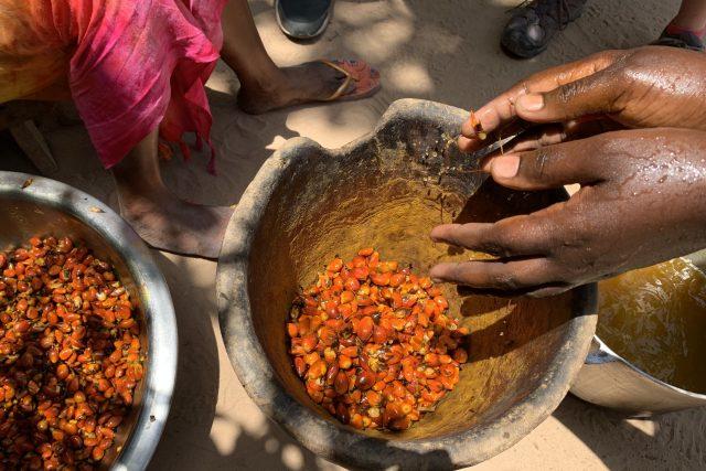 Palmové plody v kuchyni