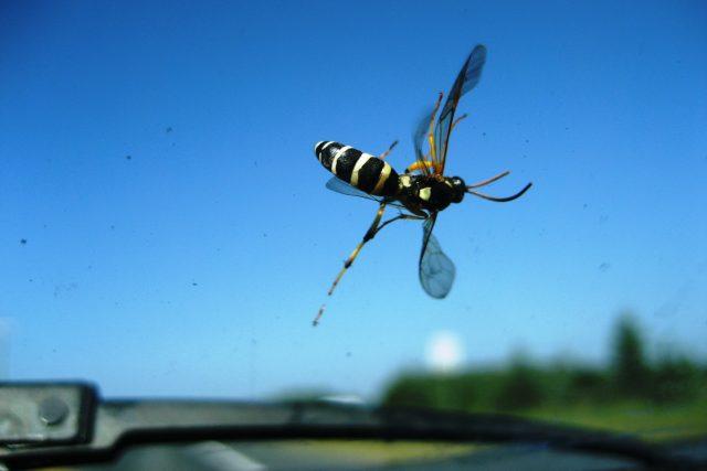 Počet hmyzu na čelních sklech aut slouží vědcům jako indikátor jeho počtu v přírodě