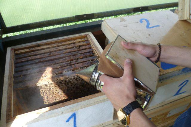 Včelaření,  ilustrační foto | foto: Irena Šarounová