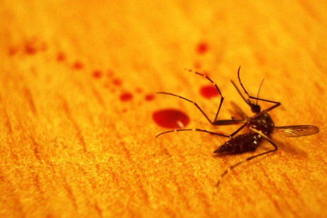 Mrtvý komár