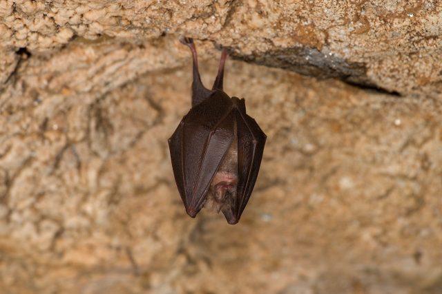 Jeskyně slouží také jako zimoviště netopýrů