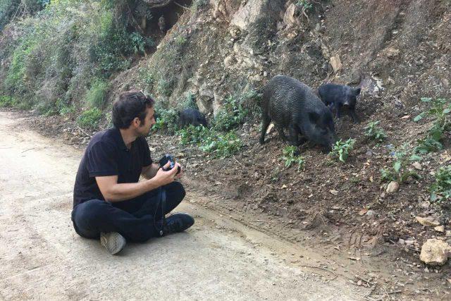 Člen výzkumného týmu Aníbal Arregui na předměstí Barcelony, kam se stahuje velké množství divokých prasat