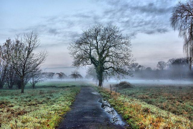 Příroda, strom, krajina, tráva, nebe, mlha, cesta, venkov (ilustrační foto)