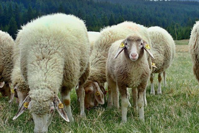 Odměnou za pastevectví je oáza klidu v lůně přírody. Východy slunce, kdy se ranní mlhou prodírají první paprsky jako zlaté nitě