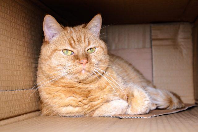 V krabici je kočka spokojená