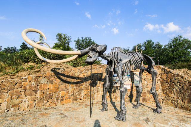 Tato kostra je velmi oblíbená především mezi dětmi. Je to mamut srstnatý | foto: Pavel Vlček