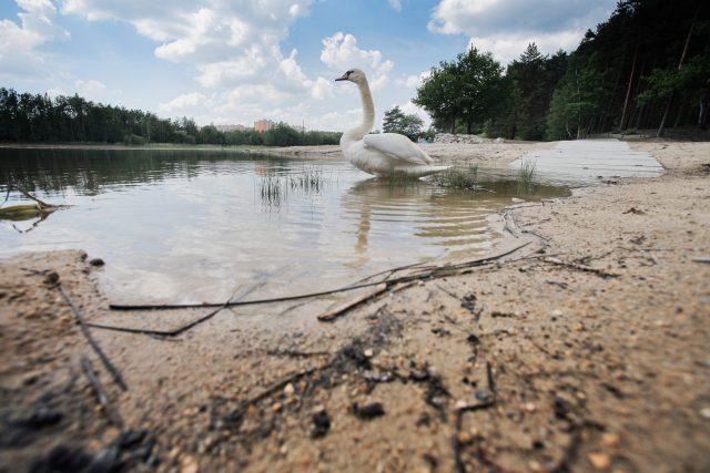 Senecký rybník