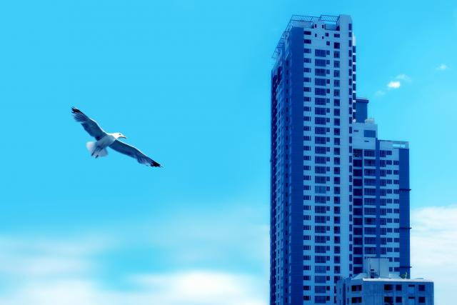 Ptáci ve městě