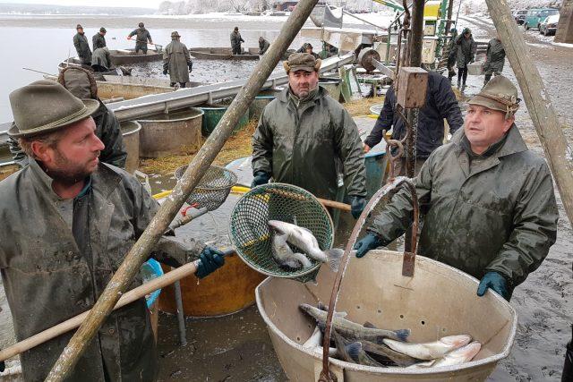 Už zimní počasí provází výlov rybníka Svět na Třeboňsku