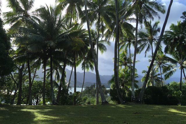 Pohled z Moku O Loe neboli Kokosového ostrova na pobřeží ostrova Oahu..JPG
