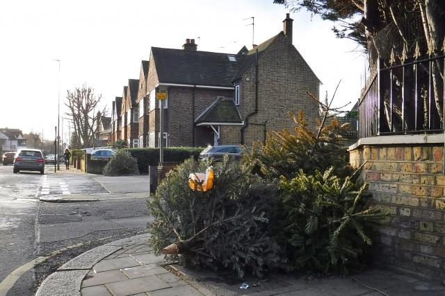 Vyhozené vánoční stromky