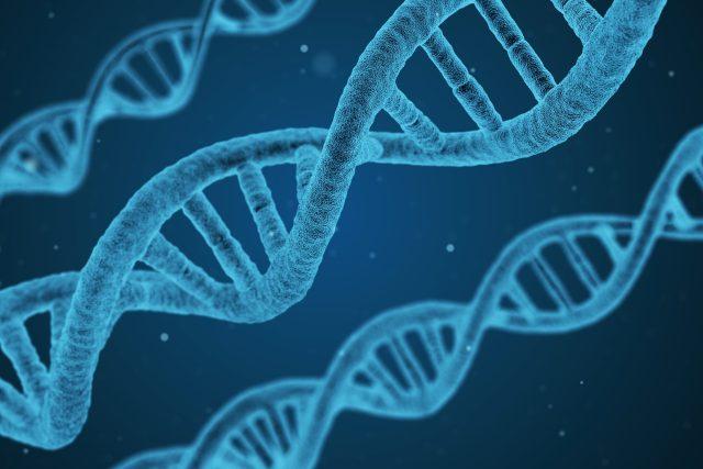 DNA - geny - genom
