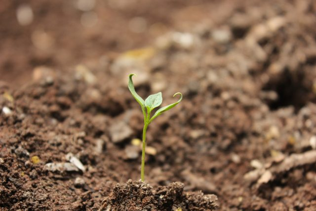 Půda - pěstování plodin