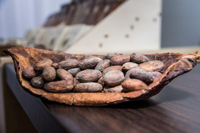 Kakaové boby | foto: Antonín Pekr