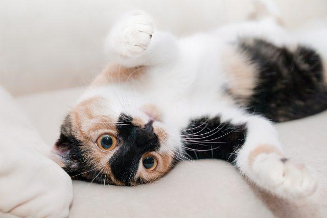 Kočka (ilustrační foto)