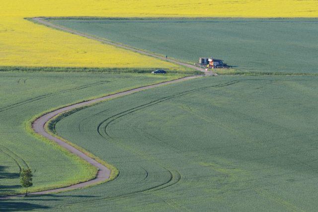 Řepka lemuje cyklostezku v polích mezi Pardubicemi a Kunětickou horou