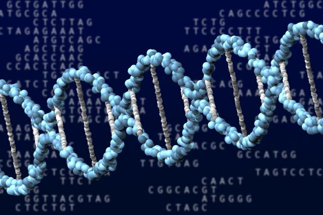 DNA (ilustrační foto)
