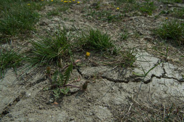 Suchem rozpraskaná pastvina u Zbudova v jižních Čechách (ilustrační foto)