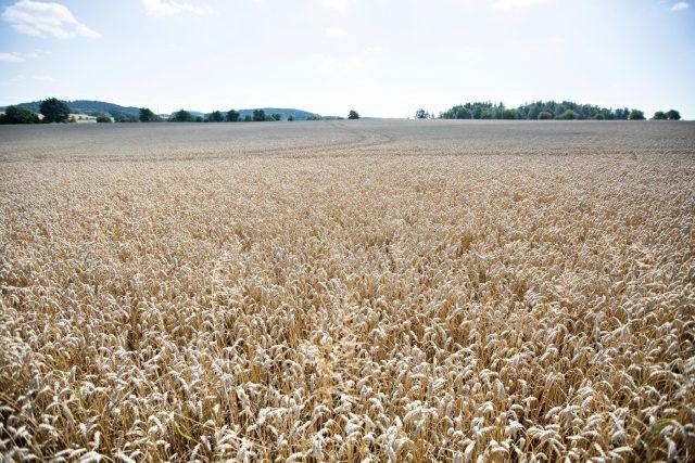 Na dotace pro menší zemědělce dosáhly i velké firmy (ilustrační foto)
