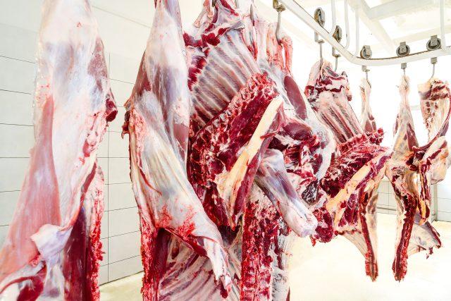 Jatka, kráva, krávy, hovězí půlky, hovězí maso